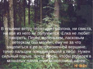 В ельнике ветру тесно - нет разгона, ни свиста, ни воя из него не получается.
