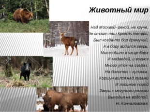 Животный мир Над Москвой- рекой, на круче, Где стоит наш Кремль теперь, Был к