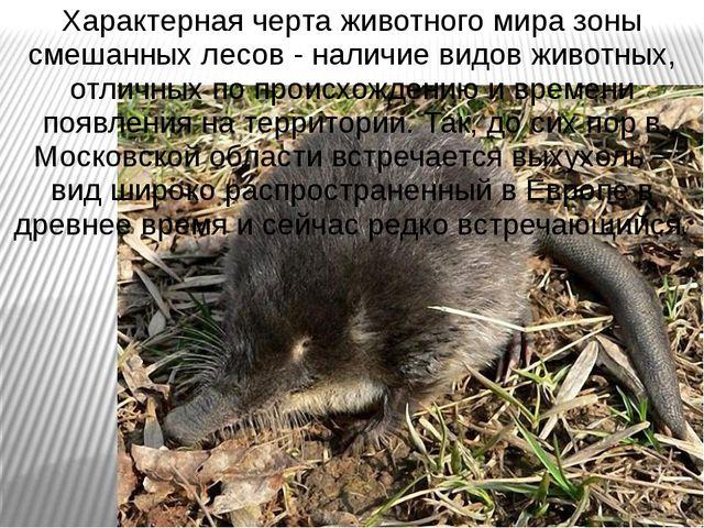 Характерная черта животного мира зоны смешанных лесов - наличие видов животны...