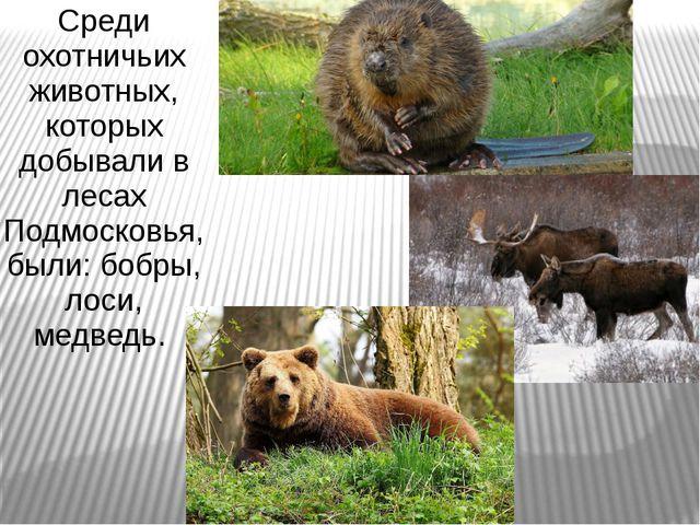 Среди охотничьих животных, которых добывали в лесах Подмосковья, были: бобры,...