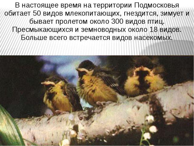 В настоящее время на территории Подмосковья обитает 50 видов млекопитающих, г...