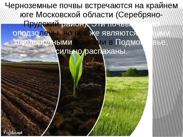 Черноземные почвы встречаются на крайнем юге Московской области (Серебряно- П...