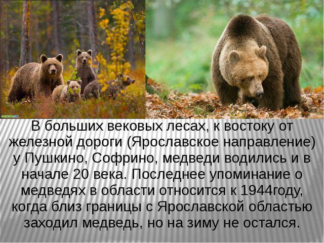 В больших вековых лесах, к востоку от железной дороги (Ярославское направлени...