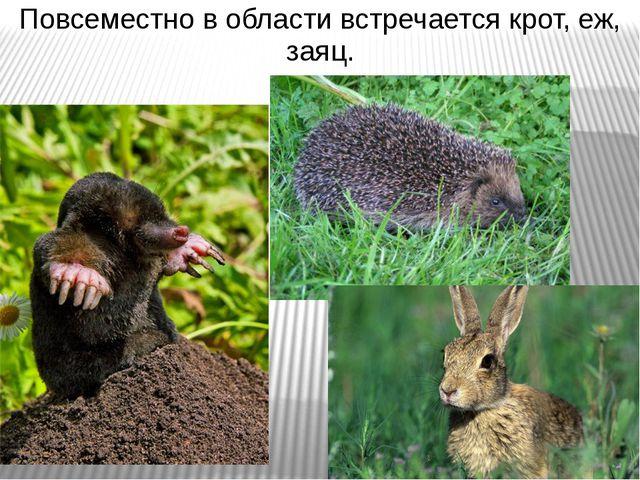 Повсеместно в области встречается крот, еж, заяц.