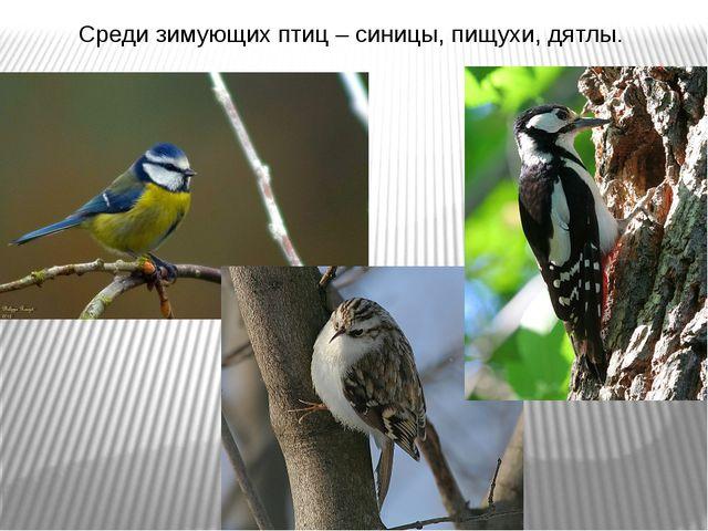 Среди зимующих птиц – синицы, пищухи, дятлы.