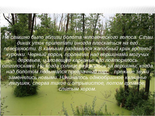 Не слышно было вблизи болота человеческого голоса. Стаи диких уток прилетали...
