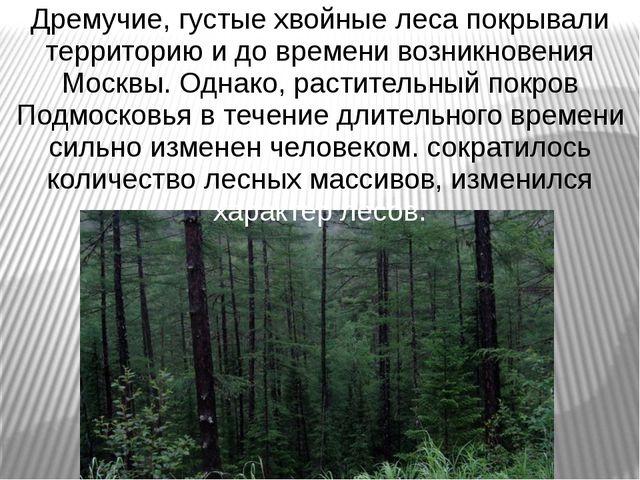 Дремучие, густые хвойные леса покрывали территорию и до времени возникновения...