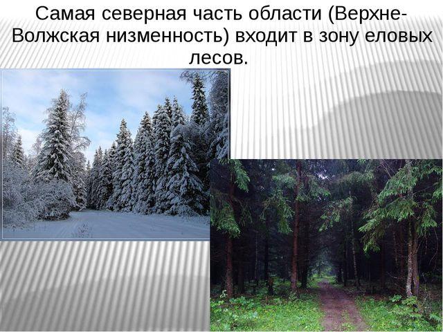 Самая северная часть области (Верхне-Волжская низменность) входит в зону елов...