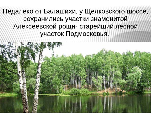 Недалеко от Балашихи, у Щелковского шоссе, сохранились участки знаменитой Але...