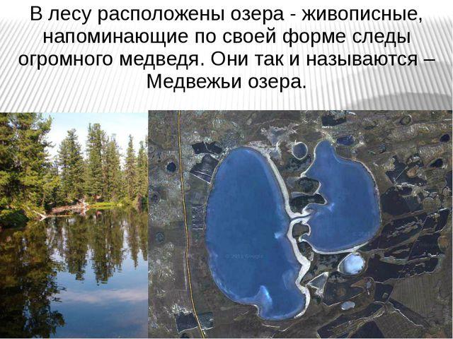 В лесу расположены озера - живописные, напоминающие по своей форме следы огро...