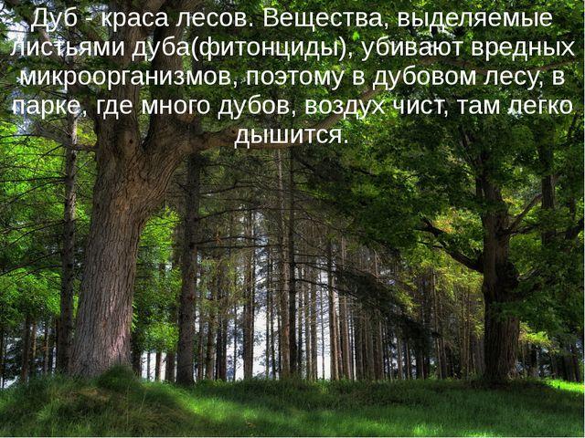Дуб - краса лесов. Вещества, выделяемые листьями дуба(фитонциды), убивают вре...