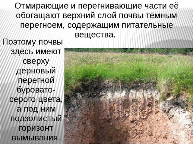 Отмирающие и перегнивающие части её обогащают верхний слой почвы темным перег...