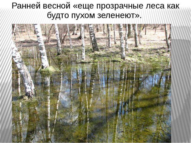 Ранней весной «еще прозрачные леса как будто пухом зеленеют».