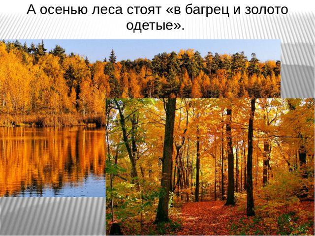 А осенью леса стоят «в багрец и золото одетые».