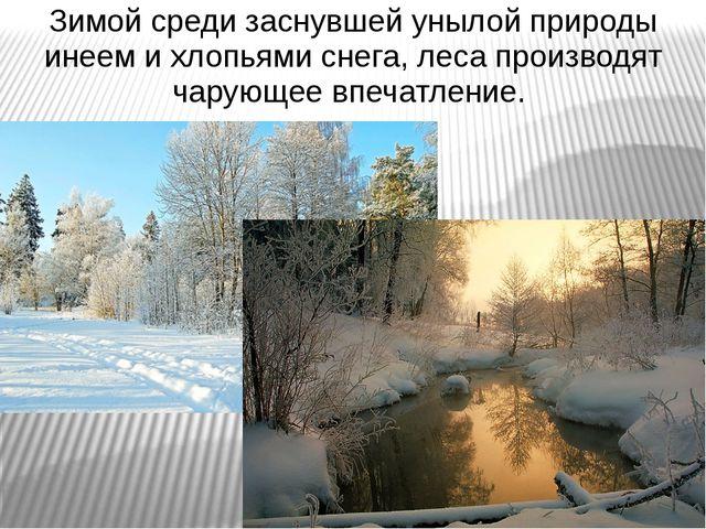 Зимой среди заснувшей унылой природы инеем и хлопьями снега, леса производят...