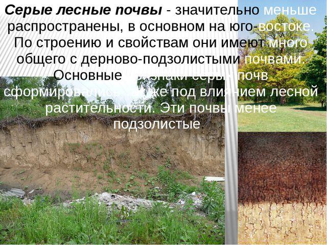 Серые лесные почвы - значительно меньше распространены, в основном на юго-вос...