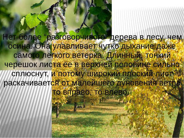 """Нет более """"разговорчивого"""" дерева в лесу, чем осина. Она улавливает чутко дых..."""