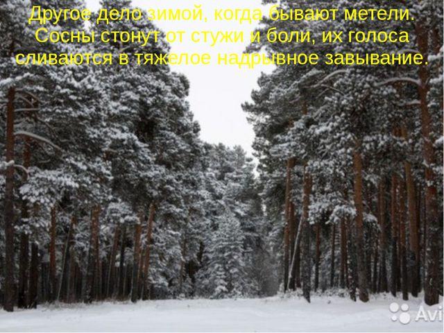 Другое дело зимой, когда бывают метели. Сосны стонут от стужи и боли, их голо...