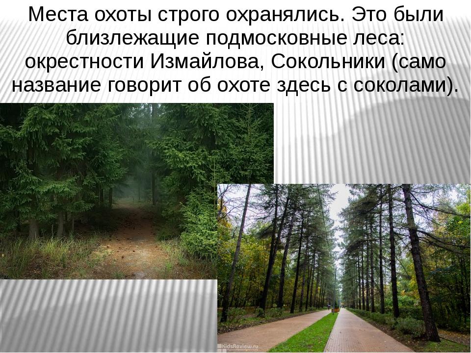 Места охоты строго охранялись. Это были близлежащие подмосковные леса: окрест...