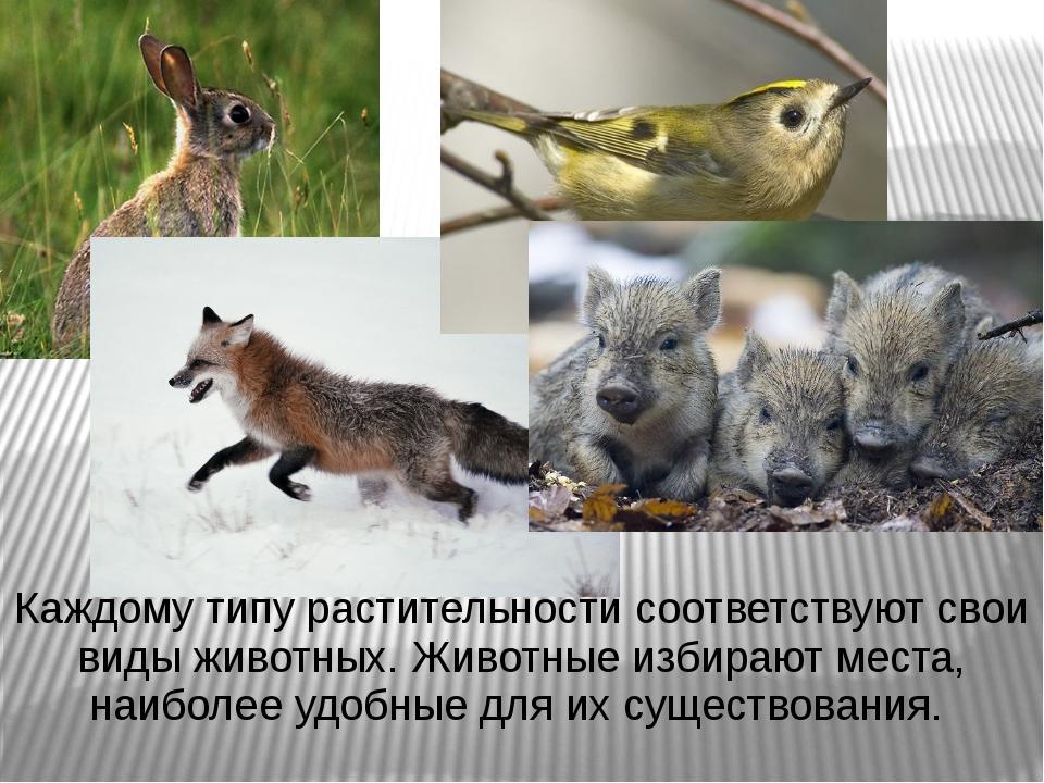 Каждому типу растительности соответствуют свои виды животных. Животные избира...