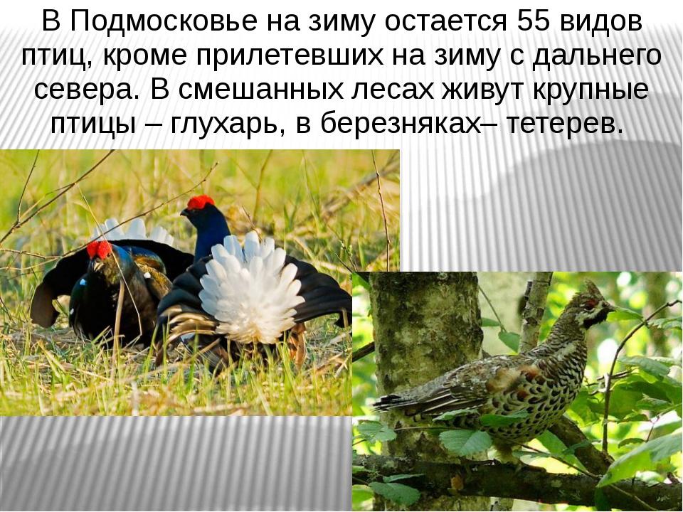 В Подмосковье на зиму остается 55 видов птиц, кроме прилетевших на зиму с дал...