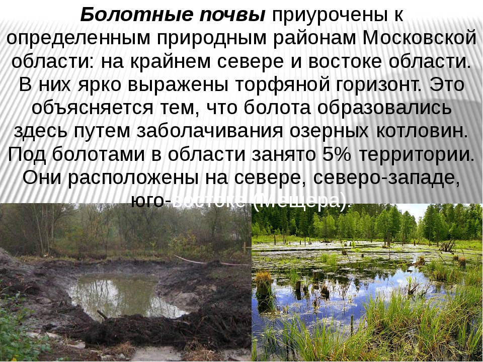 Болотные почвы приурочены к определенным природным районам Московской области...