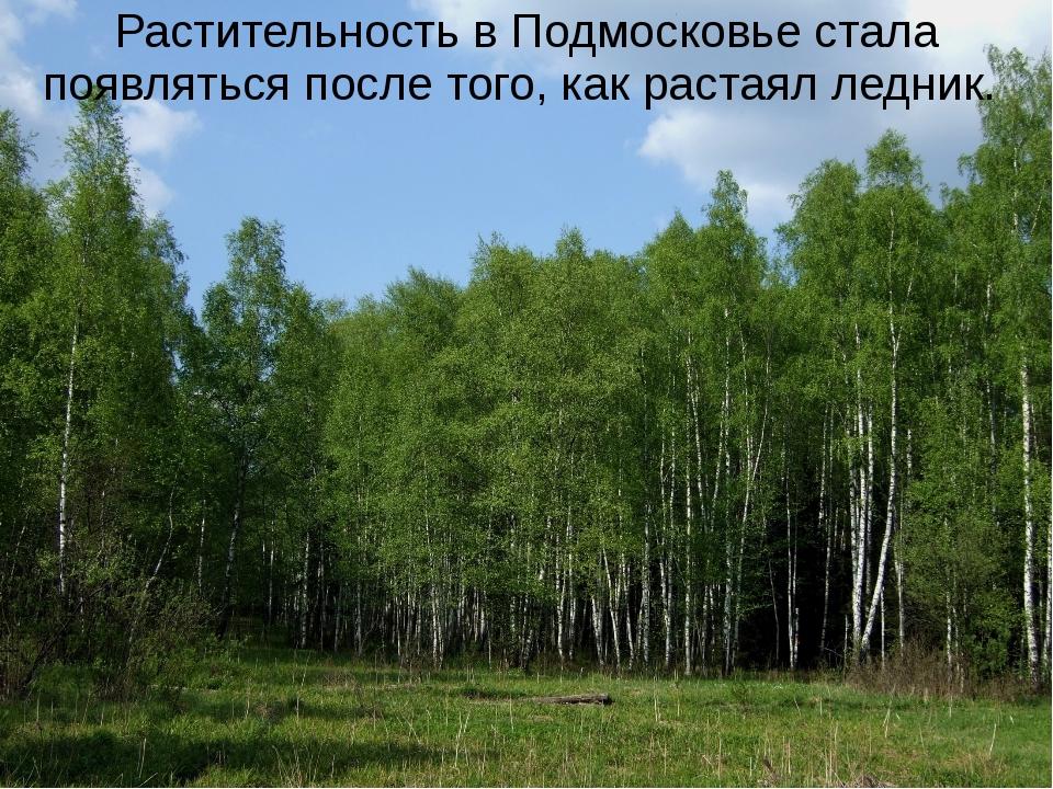 Растительность в Подмосковье стала появляться после того, как растаял ледник.
