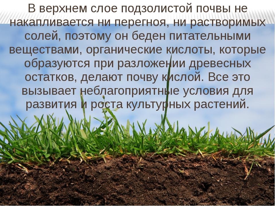 В верхнем слое подзолистой почвы не накапливается ни перегноя, ни растворимых...