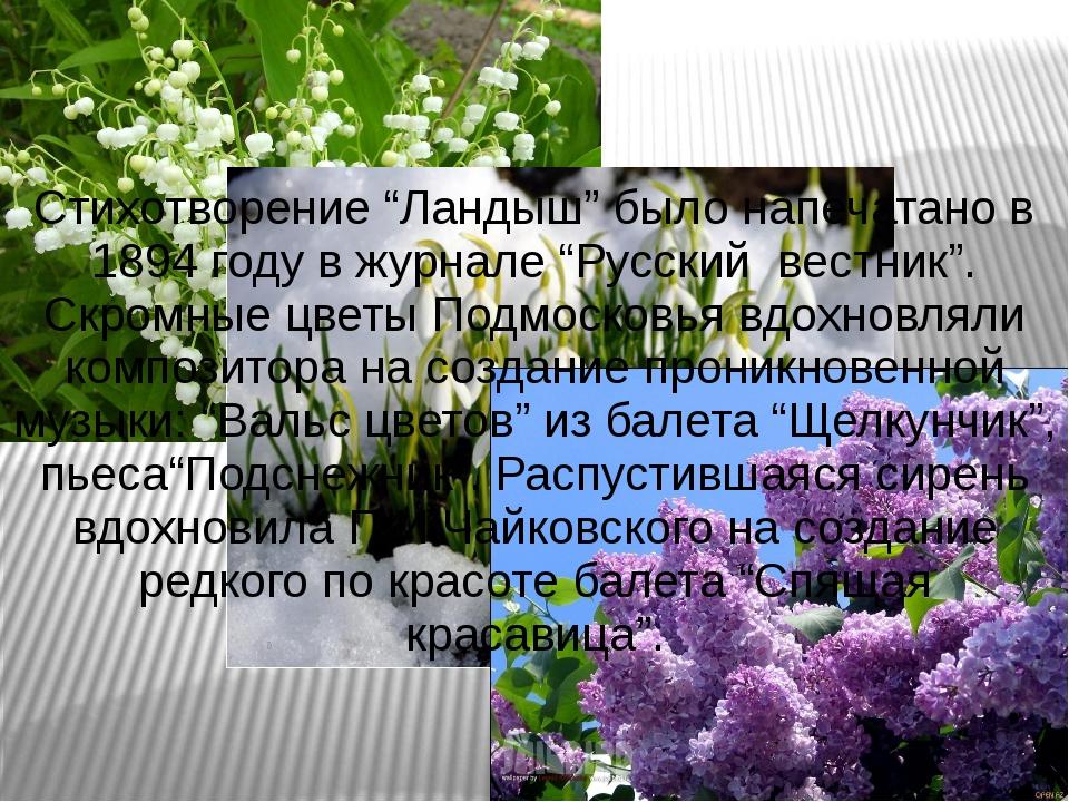 """Стихотворение """"Ландыш"""" было напечатано в 1894 году в журнале """"Русский вестник..."""