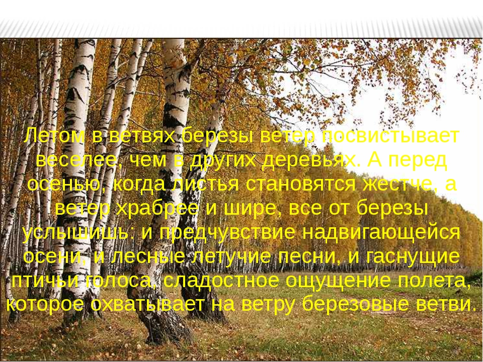 Летом в ветвях березы ветер посвистывает веселее, чем в других деревьях. А пе...