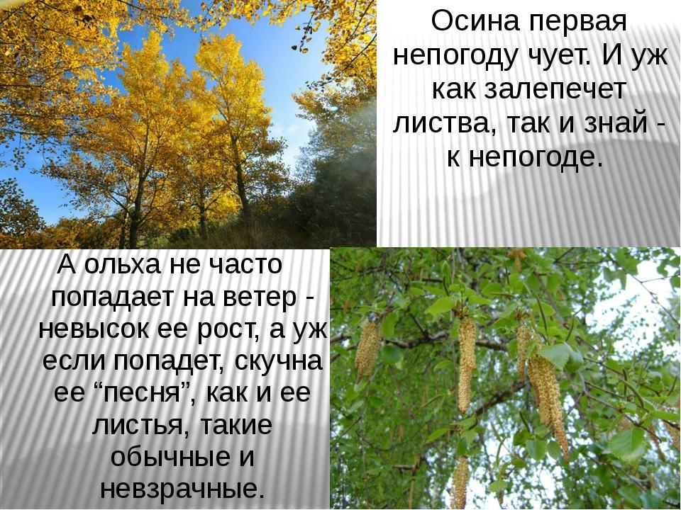 Осина первая непогоду чует. И уж как залепечет листва, так и знай - к непогод...