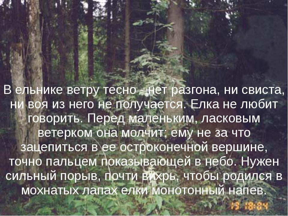 В ельнике ветру тесно - нет разгона, ни свиста, ни воя из него не получается....