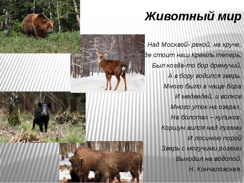Животный мир Над Москвой- рекой, на круче, Где стоит наш Кремль теперь, Был к...