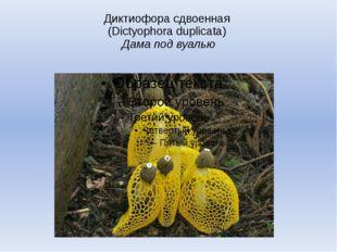 Диктиофора сдвоенная (Dictyophora duplicata) Дама под вуалью