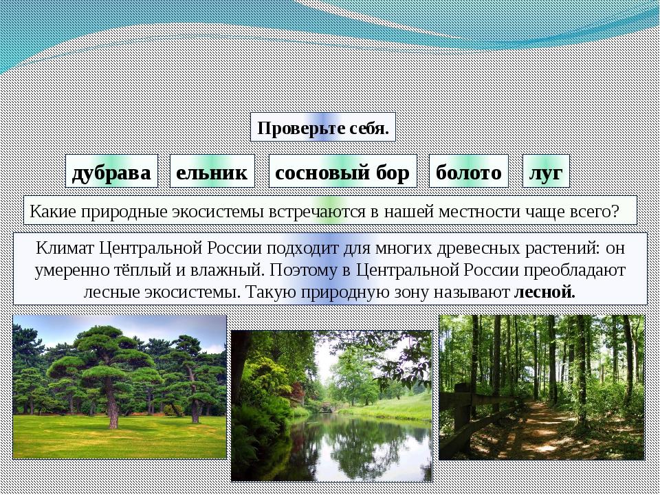 дубрава болото луг Проверьте себя. ельник сосновый бор Климат Центральной Рос...