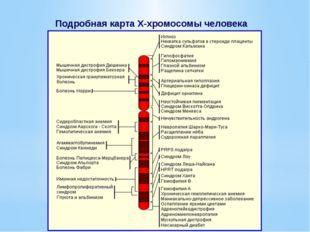 Подробная карта Х-хромосомы человека