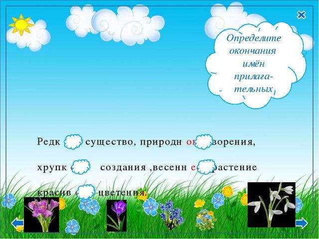 Редк ое существо, природн ого творения, хрупк ого создания ,весенн ее растени...
