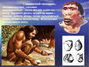 Питека́нтроп ( «яванский человек», обезьяночеловек, «человек выпрямленный)-