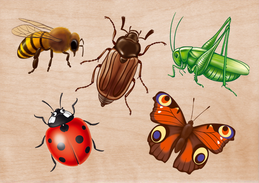 Знакомим малышей с насекомыми