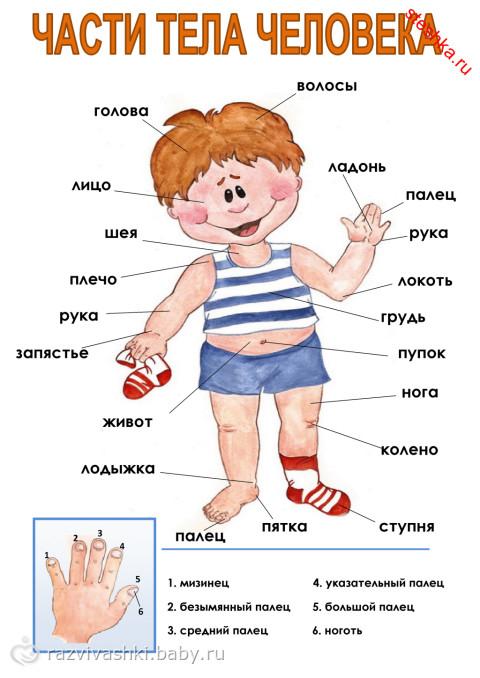 http://cs33.babysfera.ru/e/f/9/9/254376840.257629213.jpeg