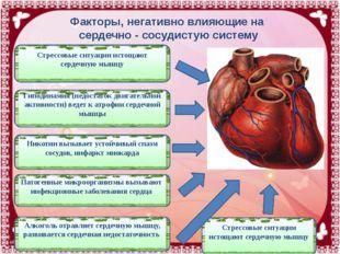 Стрессовые ситуации истощают сердечную мышцу Алкоголь отравляет сердечную мыш