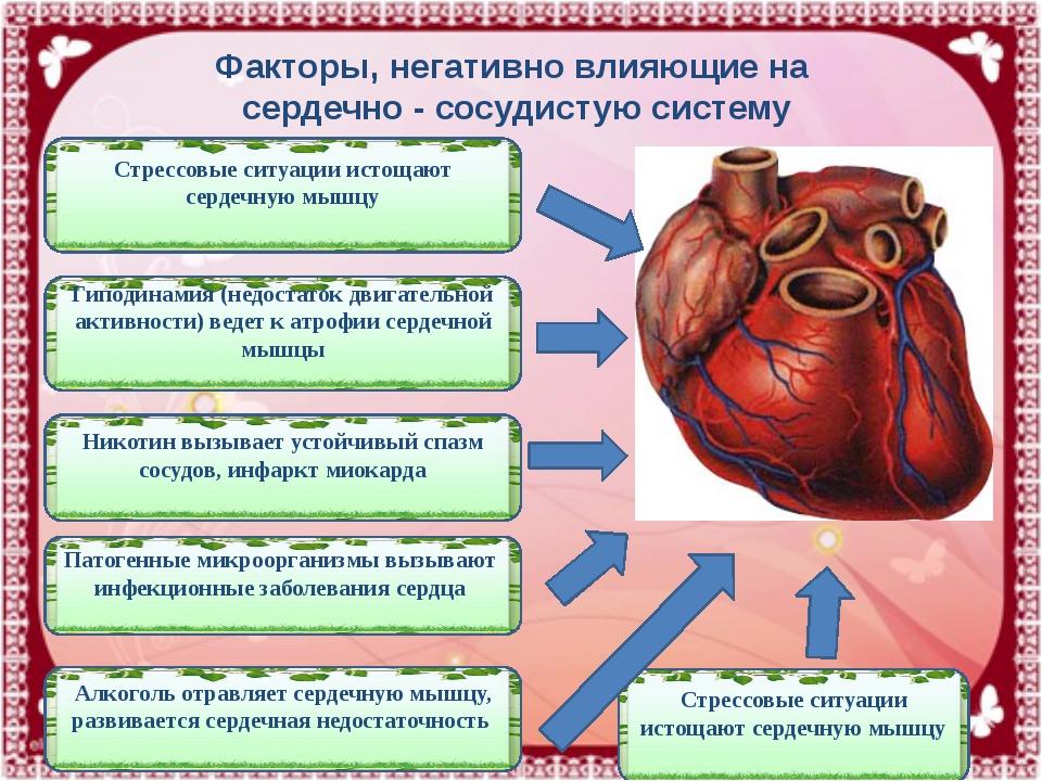 Стрессовые ситуации истощают сердечную мышцу Алкоголь отравляет сердечную мыш...