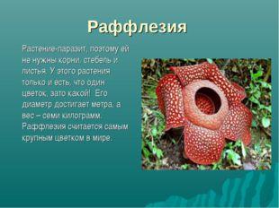 Раффлезия Растение-паразит, поэтому ей не нужны корни, стебель и листья. У э