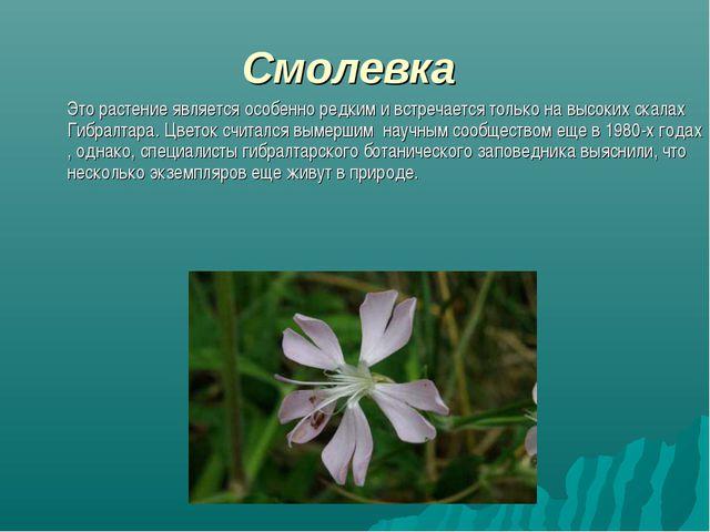 Смолевка Это растение является особенно редким и встречается только на высок...