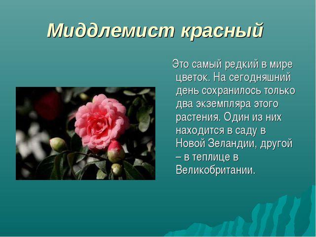 Миддлемист красный Это самый редкий в мире цветок. На сегодняшний день сохран...