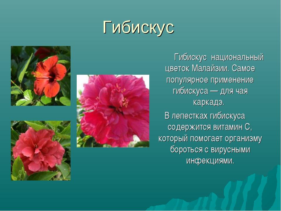Гибискус  Гибискус национальный цветок Малайзии. Самое популярное применени...