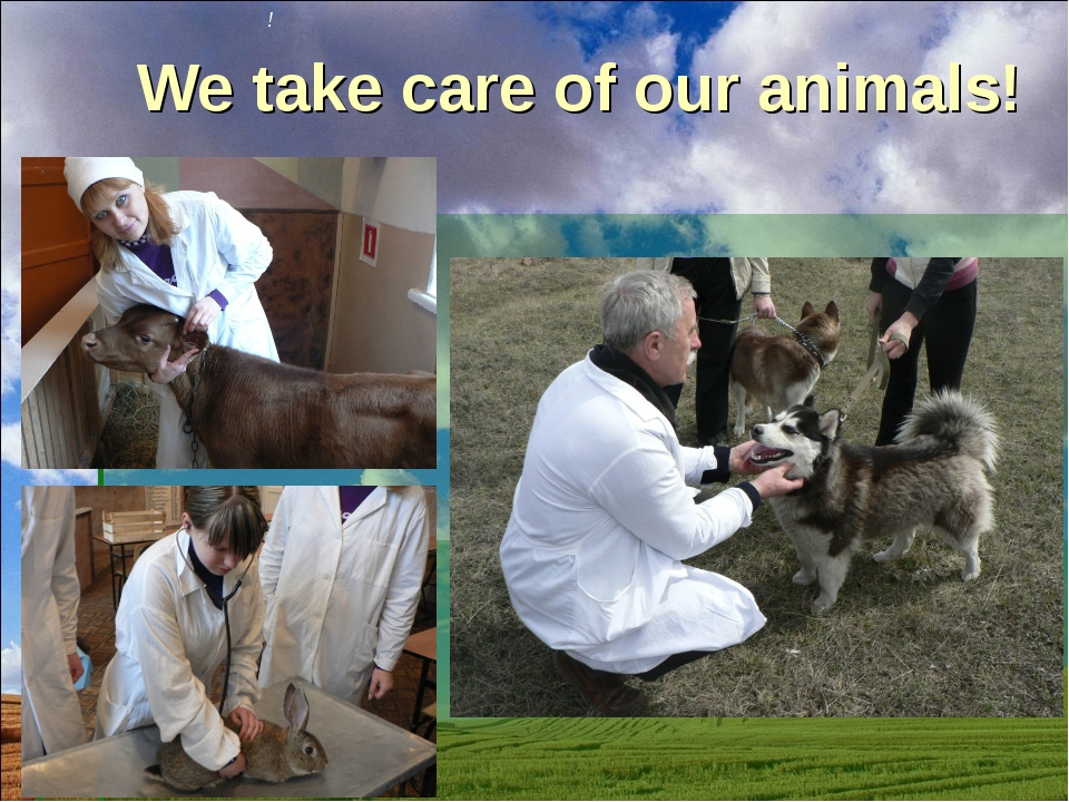 We take care of our animals! !