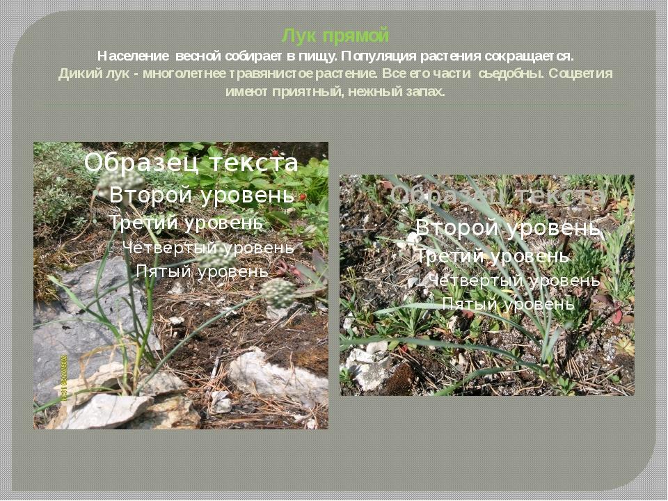 Лук прямой Население весной собирает в пищу. Популяция растения сокращается....
