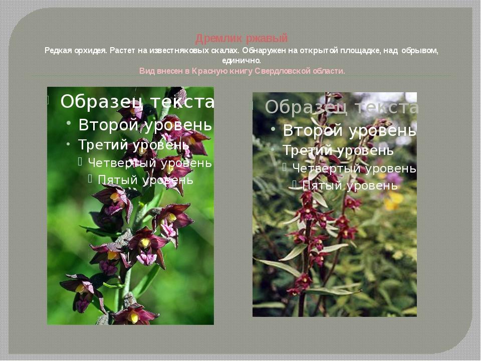 Дремлик ржавый Редкая орхидея. Растет на известняковых скалах. Обнаружен на...