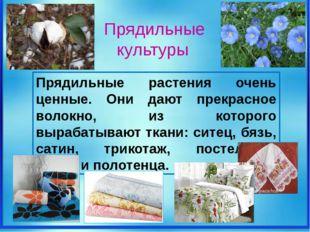 Прядильные растения очень ценные. Они дают прекрасное волокно, из которого в
